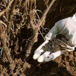 Comment fabriquer des engrais naturels pour votre jardin ?